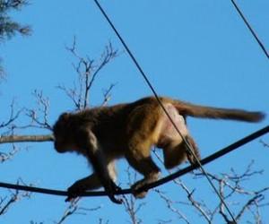 El trasero del mono